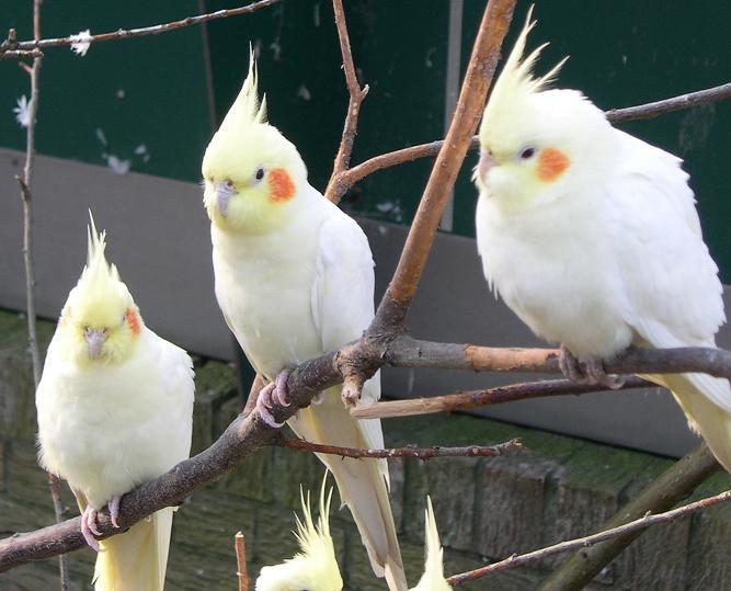عکس پرنده ی طوطی